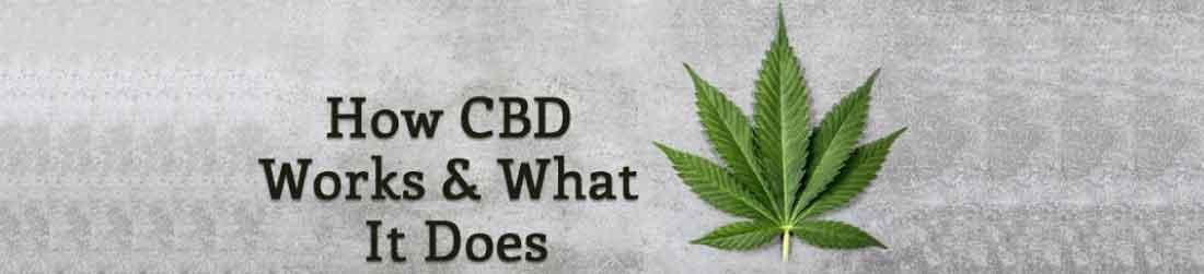 how does cbd work